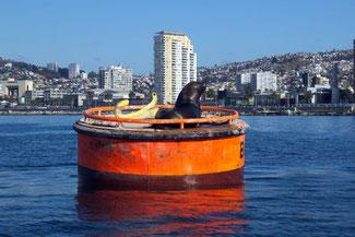 Hafen, Schiffe, Valparaiso, Südamerika, Chile, Die Traumreiser, Seelöwe