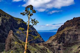 Teneriffa, Kanarische Inseln, Die Traumreiser, Masca, Masca Tal