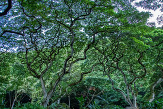 Waimea Valley, Oahu, Hawaii, USA, Strand, Die Traumreiser