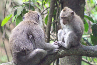 Der Affenwald von Ubud