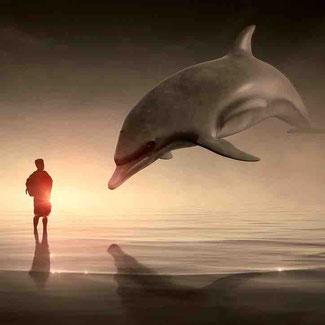 Heilung Delphin Energie