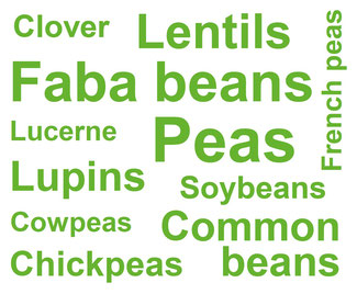 Types of Legumes involved in TRUE Case Studies