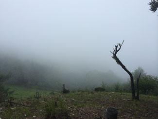 裸山からの眺望。こちらも何も見えない。