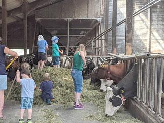 mitarbeit im Stall beim füttern