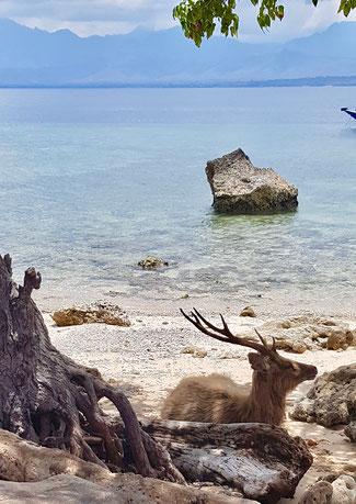 Deer Island, Pulau Menjangan