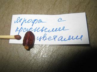 Ятрофа с красными цветками.Грунт универсальный , с добавлением разрыхлителей или для кактусов, заглубить на 1 - 1,5 см