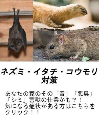 ネズミ イタチ コウモリ