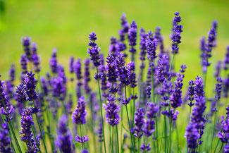 Achtsamkeit für Erwachsene - mindfulness - Achtsamsein - Achtsammitdir - Blumenwiese