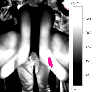 Pferdethermografie Pferderücken Thermografie Sattel Druckstelle
