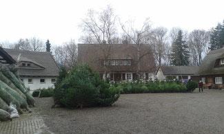 Weihnachtsbäume Goslar Bauernhof