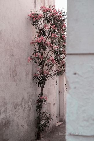Street Photography aus Marseille - Fotograf Hanau