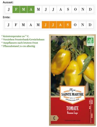 Tomate Banana Legs von Ferme de Sainte Marthe bei www.the-golden-rabbit.de