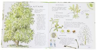Linde, Weide, Apfelbaum - Bäume bestimmen mit Kindern bei www.the-golden-rabbit.de