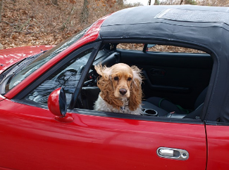 (窓開けで犬に外を眺めさせながら運転するのは危険)