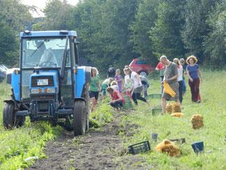 Copyright: Netzwerk Solidarische Landwirtschaft; Kartoffelernte Solawi Schnieker Höfe/Kiel