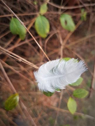 Weiße flauschige Feder fällt auf ein Blatt