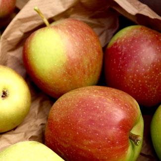 appels opslaan, appels goedhouden, appels bewaren, appelboom, malus domestica
