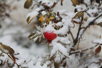 Winter Bist Du Willkommen Sprechweise Praxis Für