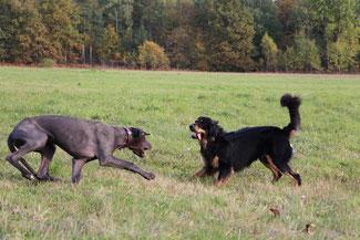 Lotta und Leon im Spiel