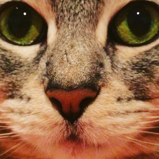 cats domestication archaeology DNA