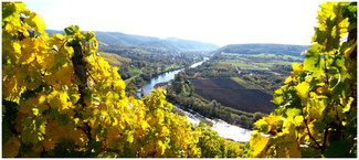 The saar river and its wines