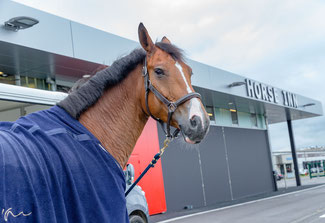 Liege Airport has invested in a state-of-the-art Horse Inn, which is paying off  -  photo: LGG