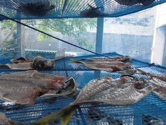 干し網で干したアジ の写真