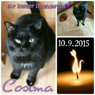 Cosima R.i.P. 10.9.2015