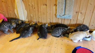 seit Mai 2016 befinden sich ca 20 Kitten bei uns