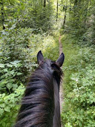 Auf Trampelpfaden durch den Wald