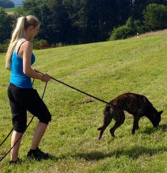 Fährten mit Hund
