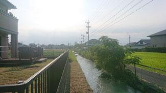 水路に張り出すように張り出す草