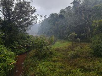 Vista sulla foresta pluviale dal ristorante