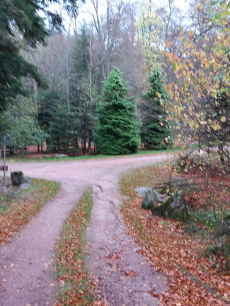 forêt près de Rosheim