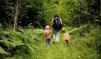 tiques et promenade en forêt