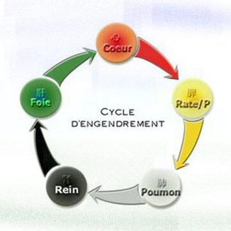 cycle d'engendrement
