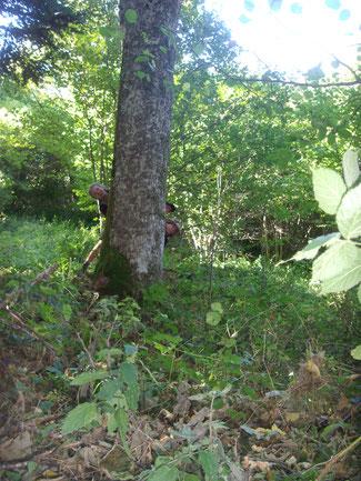 Forêt d'Illkirch