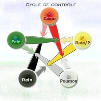 cycle de contrôle