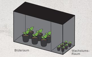 Mehrkammern Growbox