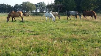 Pferdeweide bei Boberow. Foto: J. de Gruyter