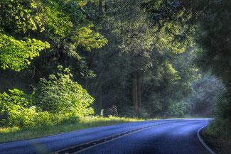 Landstrasse im Wald
