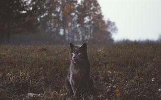 FOTO MARKO BLAZEVIC via UNSPLASH