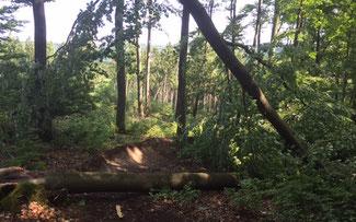 Flowtrail Bad Endbach: Gleich nach dem Start geht es los mit umgestürzten Bäumen