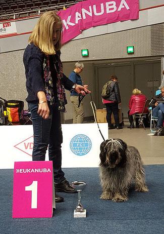 Schapendoes Ausstellung in Dortmund 2018