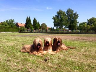 Bild: Giola, Lilly und Toni auf der Regional d'Elevage