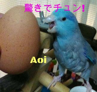 あおいと鶏の卵