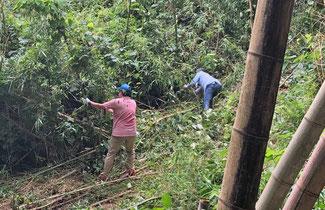 黙々と間伐作業に励む佐藤さん親子 二人とも初めてとは思えないほど手際が良くて感心しました。