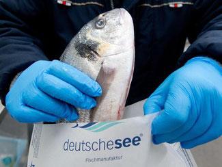Kabeljau wird für den Versand verpackt: Der Großhändler Deutsche See liefert seine Waren seit Kurzem mit Hilfe eines Online-Shops bis nach Stuttgart aus. Foto: Sebastian Kahnert