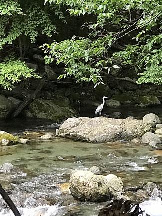 ベーターセッション後にお客様を温泉に送迎中に見かけた鷺です。ここではいつも自然の中で動植物を感じることができます。