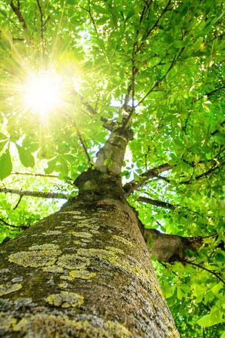 Prana Atemtechnik in der Natur. Verwenden Sie einen Baum als Ihre Kraftquelle